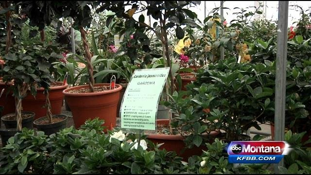 Climate Change Can Impact Your Garden Spokane North