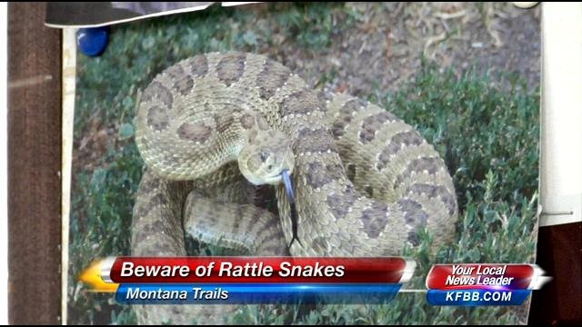 rattle snakes on montana trails